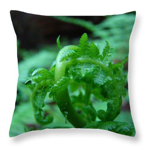 Fern Throw Pillow featuring the photograph Fern Art Prints Green Forest Ferns Giclee Baslee Troutman by Baslee Troutman
