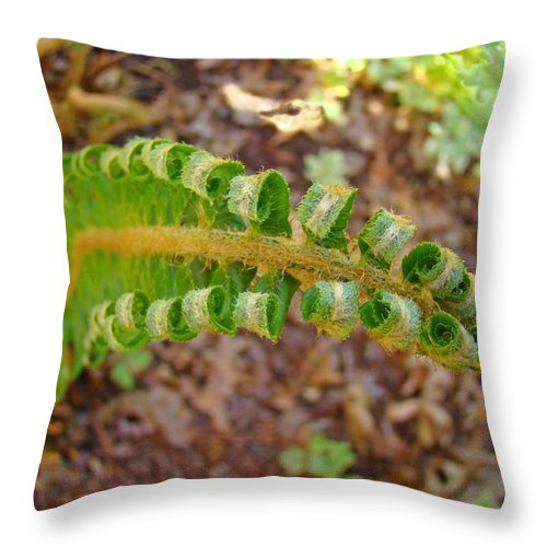 Fern Throw Pillow featuring the photograph Fern Branch Leaves Art Prints Forest Ferns Natures Baslee Troutman by Baslee Troutman