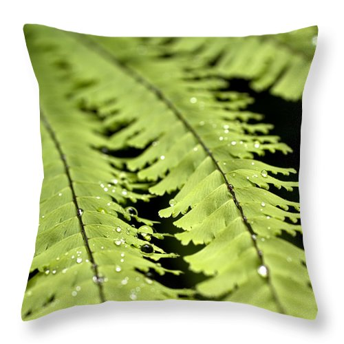 Ferns Throw Pillow featuring the photograph Fern by Jessica Wakefield