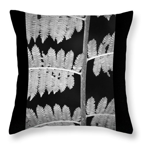 Fern Leaves Throw Pillow featuring the photograph Fern Leaves 1 by Donna Corless
