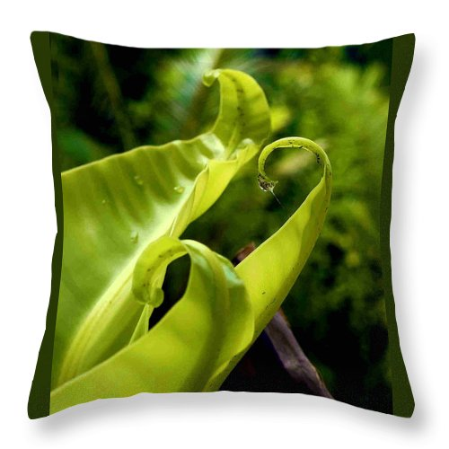Fern Leaves Throw Pillow featuring the photograph Fern Leaves by Dragica Micki Fortuna