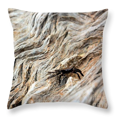 Driftwood Throw Pillow featuring the photograph Fiddler Crab On Driftwood by Katherine W Morse