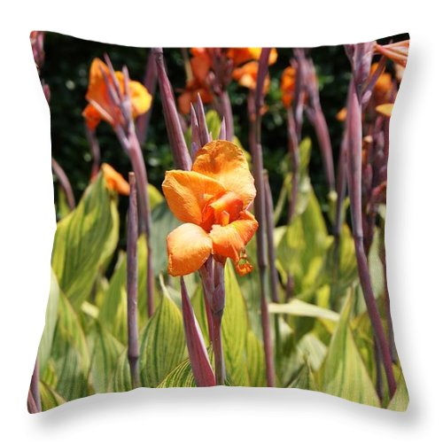 Floral Throw Pillow featuring the photograph Field For Iris by Shelley Jones
