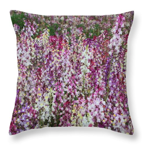 Dreams Throw Pillow featuring the photograph Field Of Dreams by Carol Groenen