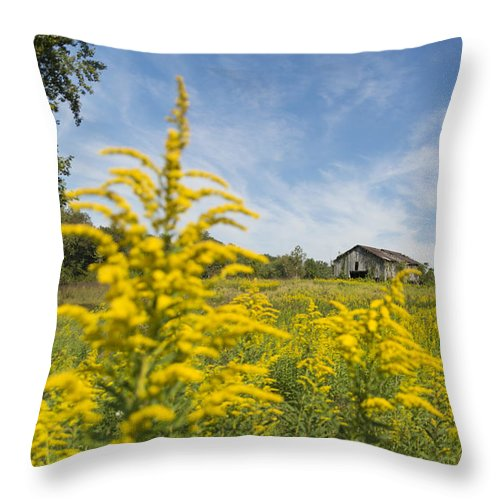 Field Throw Pillow featuring the photograph Field Of Gold by Johnnie Nicholson