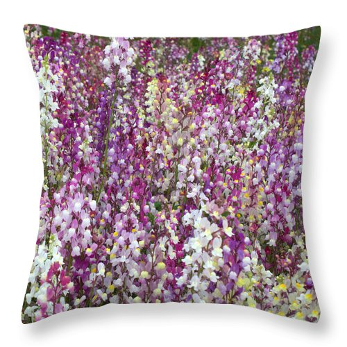 Flowers Throw Pillow featuring the photograph Field Of Multi-colored Flowers by Carol Groenen