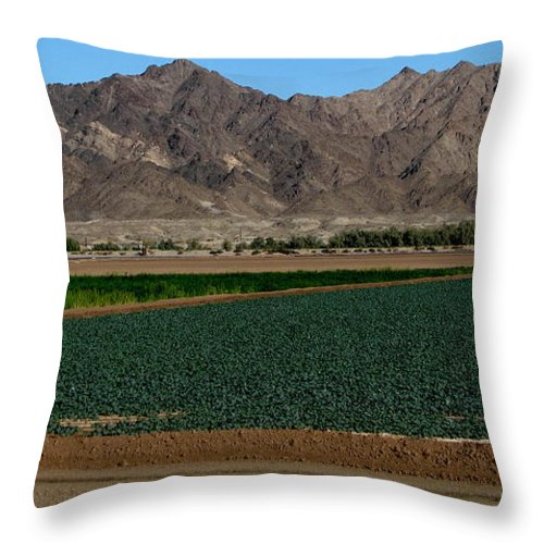 Patzer Throw Pillow featuring the photograph Fields Of Yuma by Greg Patzer