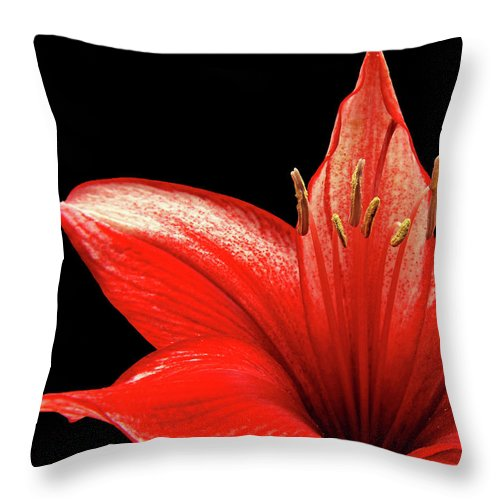 Amaryllis Throw Pillow featuring the photograph Fiery Red by Judy Vincent