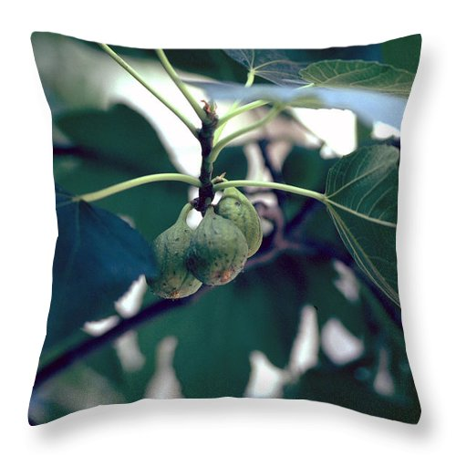 Fig Throw Pillow featuring the photograph Fig by Flavia Westerwelle