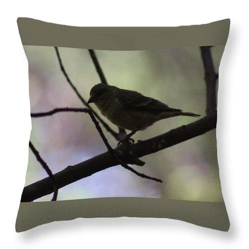 Bird Throw Pillow featuring the photograph Finch Shadow 042814b by Edward Dobosh