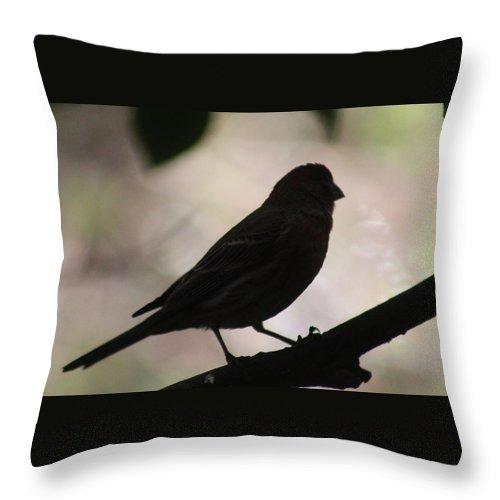 Bird Throw Pillow featuring the photograph Finch Shadow 042814d by Edward Dobosh