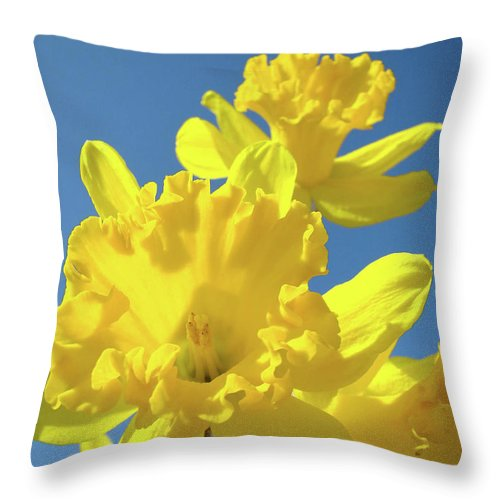Sky Throw Pillow featuring the photograph Fine Art Daffodils Floral Spring Flowers Art Prints Canvas Baslee Troutman by Baslee Troutman