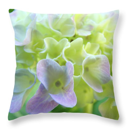 Hydrangea Throw Pillow featuring the photograph Fine Art Prints Hydrangeas Floral Nature Garden Baslee Troutman by Baslee Troutman