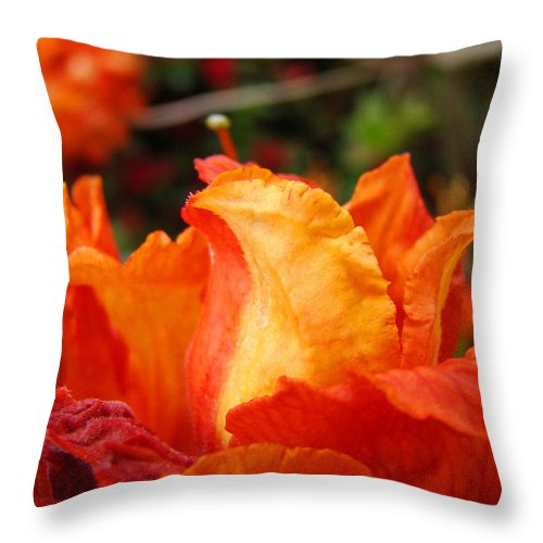 Azaleas Throw Pillow featuring the photograph Fine Art Prints Rhododendrons Floral Rhodies Baslee Troutman by Baslee Troutman
