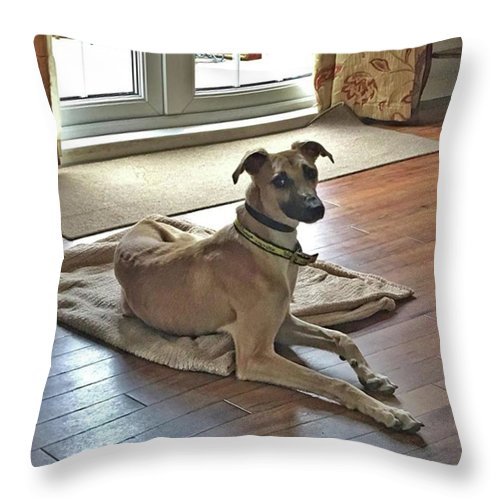 Lurcher Throw Pillow featuring the photograph Finly - Ava The Saluki's New Companion by John Edwards