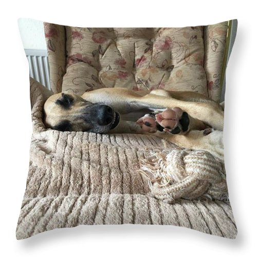 Lurcher Throw Pillow featuring the photograph Finly Found The Journey Back From by John Edwards