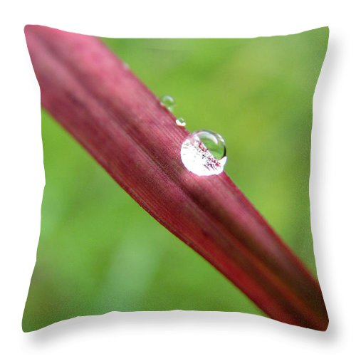 Water Throw Pillow featuring the photograph Fire And Water by Amanda Barcon