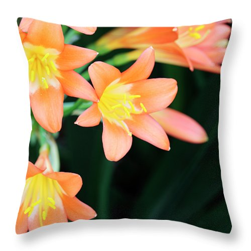 Clivia Throw Pillow featuring the photograph Fire Lily 2 by Neil Overy
