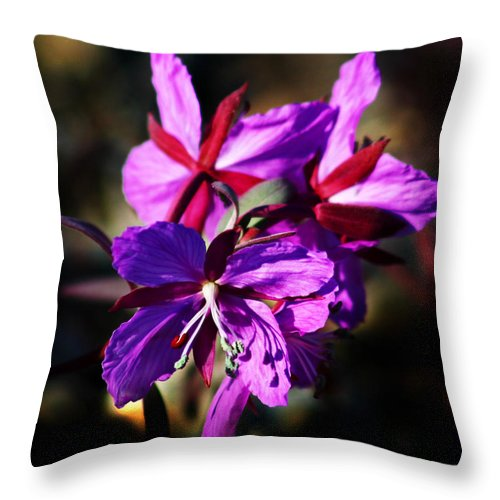 Fireweed Throw Pillow featuring the photograph Fireweed by Anthony Jones