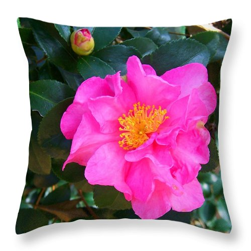 Camelia Throw Pillow featuring the photograph Firey Pink Camelia by Laurie Paci