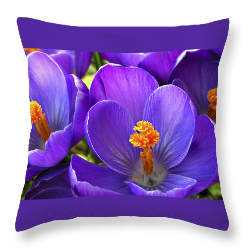 Flower Throw Pillow featuring the photograph First Crocus by Marilyn Hunt