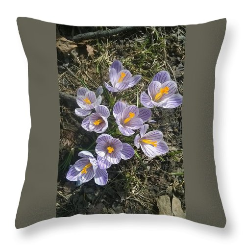 Nature Throw Pillow featuring the photograph First Crocuses Of Spring 2015 by Jacob O'Neill