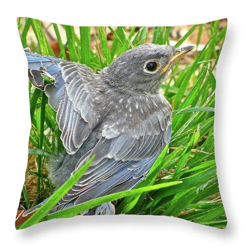 Bird Throw Pillow featuring the photograph First Flight by Diana Hatcher