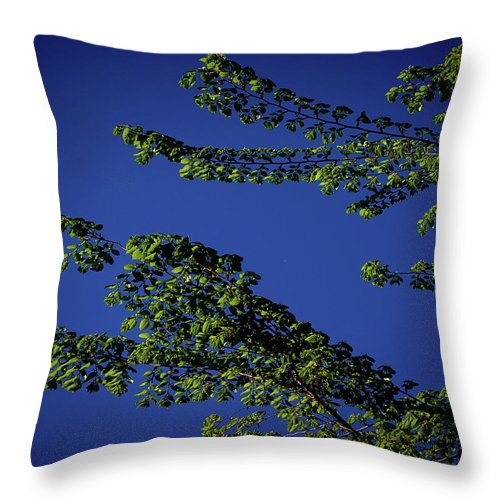 Tree Throw Pillow featuring the digital art First Signs Of Spring Iv by DigiArt Diaries by Vicky B Fuller