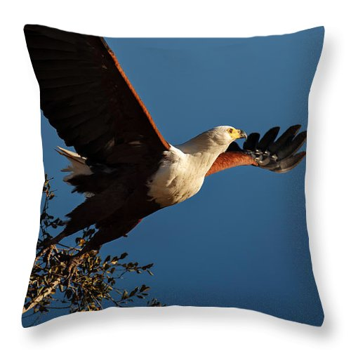 Fish Throw Pillow featuring the photograph Fish Eagle Taking Flight by Johan Swanepoel