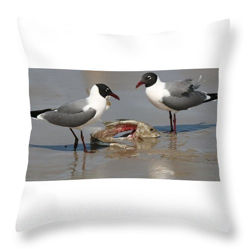 Sea Gulls Throw Pillow featuring the photograph Fish Scraps Stand Off by Christy Pooschke
