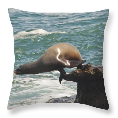 California Sea Lion Throw Pillow featuring the photograph Fishing Sea Lion by Daniel Hebard