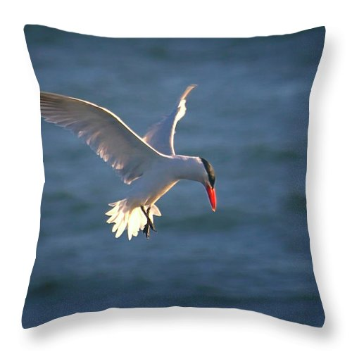 Wildlife Throw Pillow featuring the photograph Fishing Tern by Albert Seger