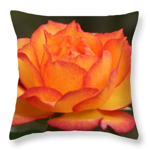 Rose Throw Pillow featuring the photograph Flame by Matthew Wilson