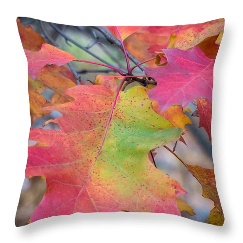 Fall Foliage Throw Pillow featuring the photograph Flaming Oak by Diane Moore