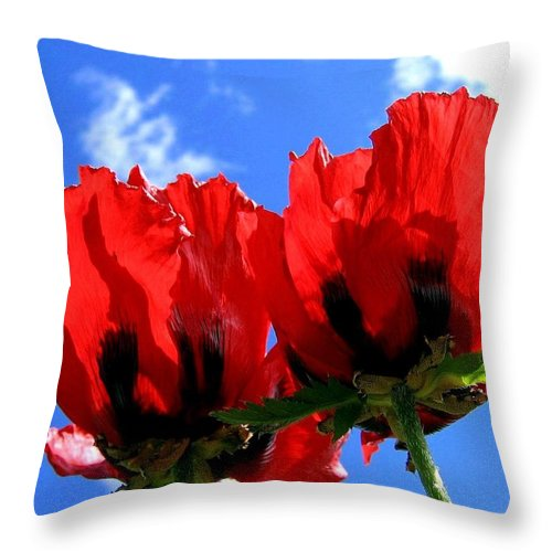 Blue Throw Pillow featuring the photograph Flaming Skies by Will Borden