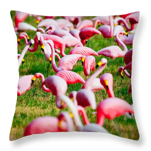 Austin Throw Pillow featuring the photograph Flamingo 6 by Sean Wray