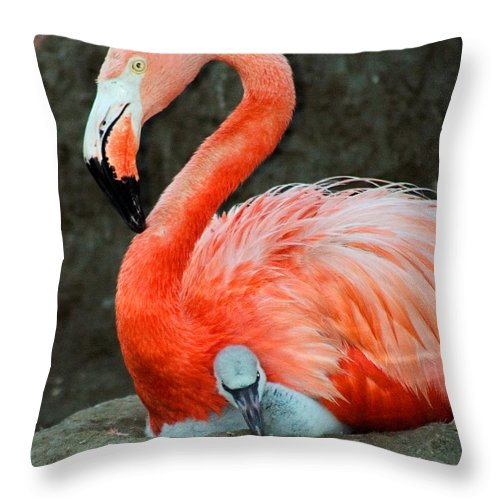 Bird Throw Pillow featuring the photograph Flamingo And Baby by Anthony Jones