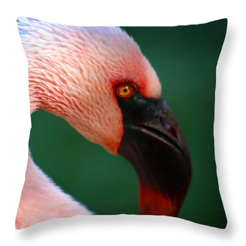 Flamingo Throw Pillow featuring the photograph Flamingo by Anthony Jones