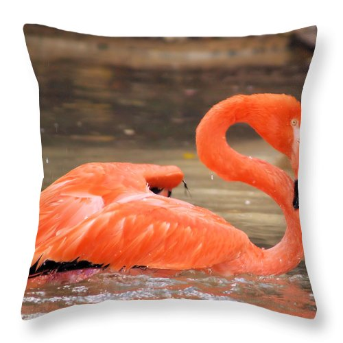 Flamingo Throw Pillow featuring the photograph Flamingo by Gaby Swanson