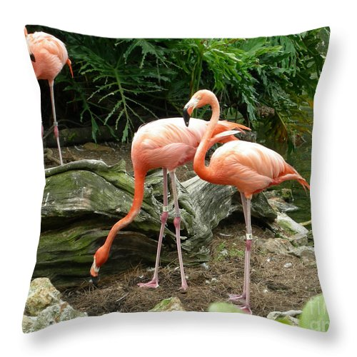 Flamingo Throw Pillow featuring the photograph Flamingos by Carol Turner