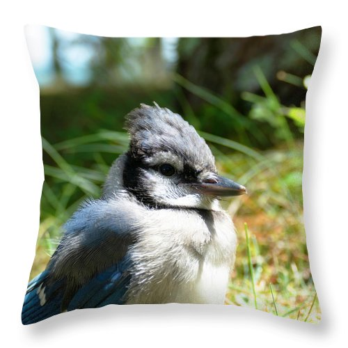 Bluejay Throw Pillow featuring the photograph Fledgling by Sally Sperry