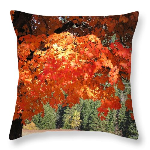 Autumn Photographs Throw Pillow featuring the photograph Flickering Sunlight by Louise Magno