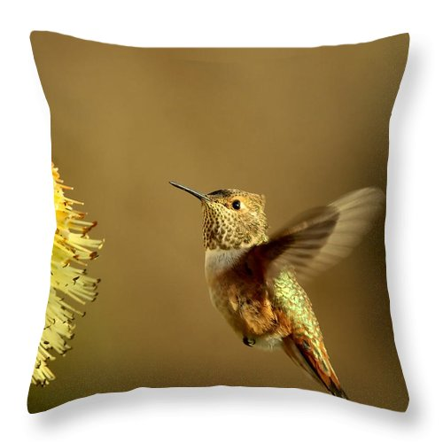 Hummingbird Throw Pillow featuring the photograph Flight Of The Hummer by Mike Dawson