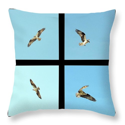 Osprey Throw Pillow featuring the photograph Flight Of The Osprey by Andy Klamar
