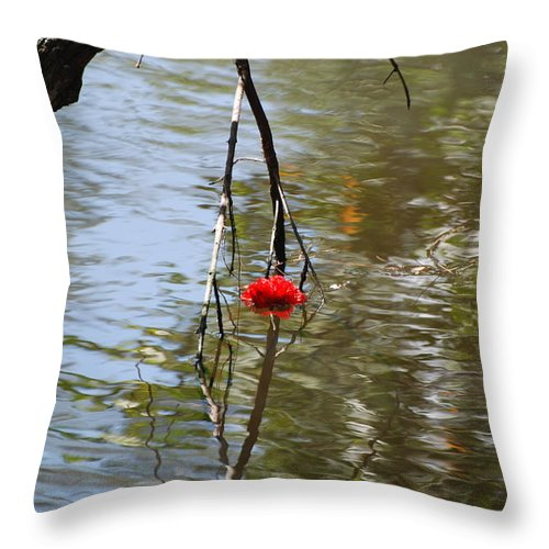 Water Throw Pillow featuring the photograph Floating Flower by Rob Hans