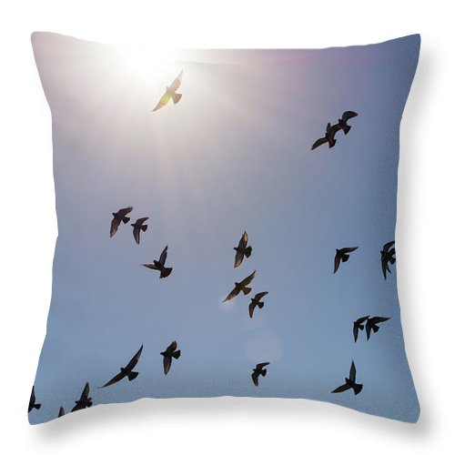 Flock Of Birds Flying Against Blue Sky And Bright Sun Throw Pillow For Sale By Bradley Hebdon