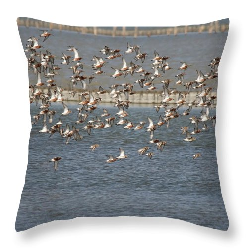 River Life Throw Pillow featuring the photograph Flock Of Birds In Flight by Cliff Norton