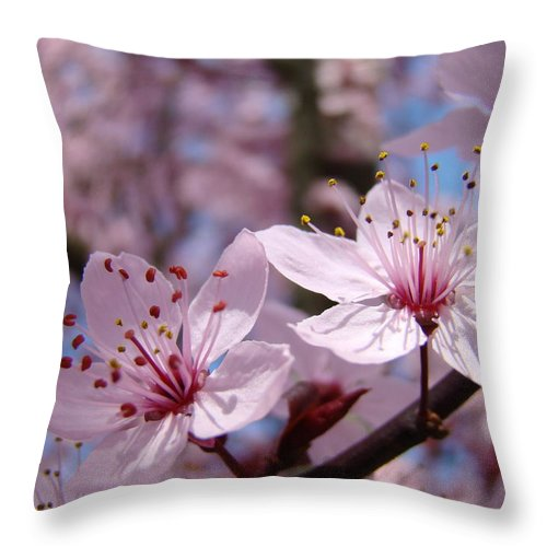 Blossom Throw Pillow featuring the photograph Floral Art Pink Spring Blossoms Prints Blue Sky Baslee Troutman by Baslee Troutman