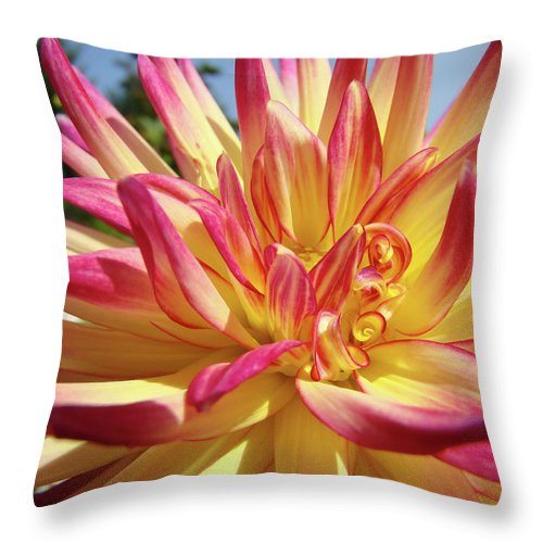 Dahlia Throw Pillow featuring the photograph Floral Art Prints Bright Dahlia Flower Canvas Baslee Troutman by Baslee Troutman