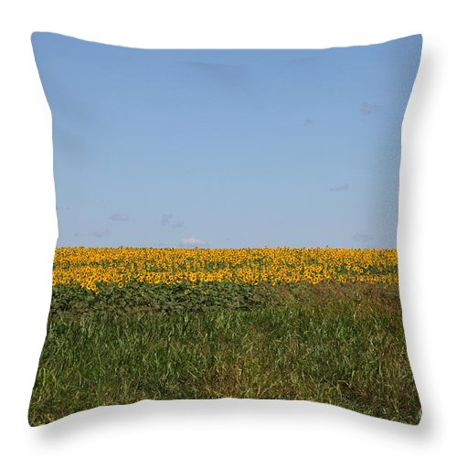 Sunflowers Throw Pillow featuring the photograph Floral Blur by Amanda Barcon